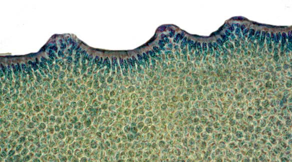 Algae revealed: more fact-sheets published | Know Our Plants  Algae revealed:...