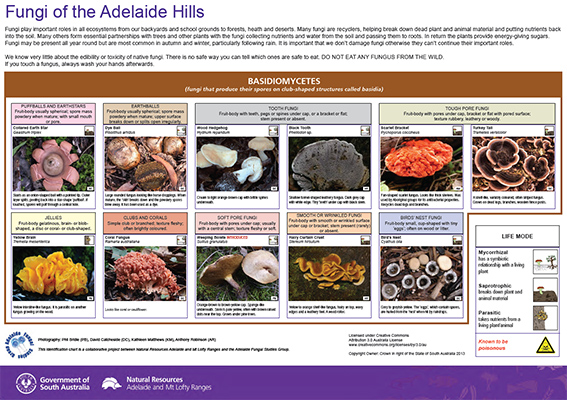 AMLR Fungi Adelaide Hills (small)