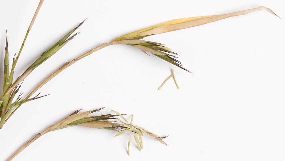 bamboo_12 JK 1000x566