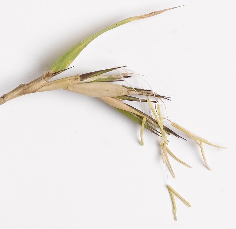 bamboo_13 JK 800x776