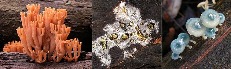 3 fungi image
