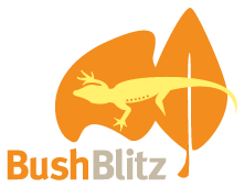 BushBlitzLogo_orange